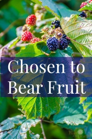 chosen-bear-fruit